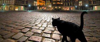 Черная кошка на улице